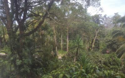 """Jungle Story: Building Business in """"Costas Más Ricas"""""""